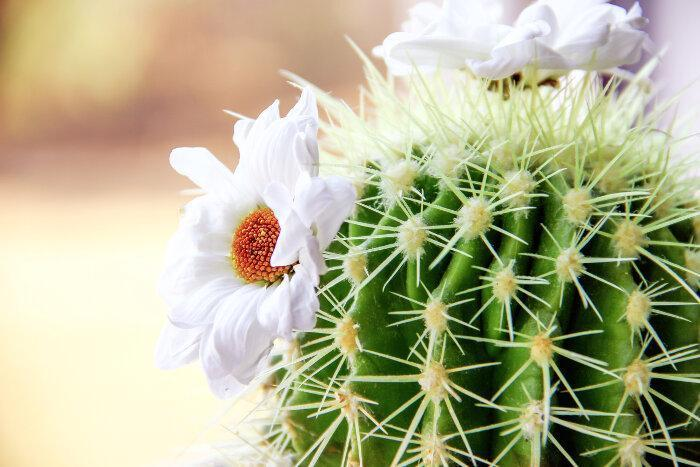 Cactus-Meaning